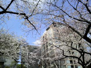 2010chidorigafuchi02.jpg