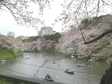 2010chidorigafuchi03.jpg